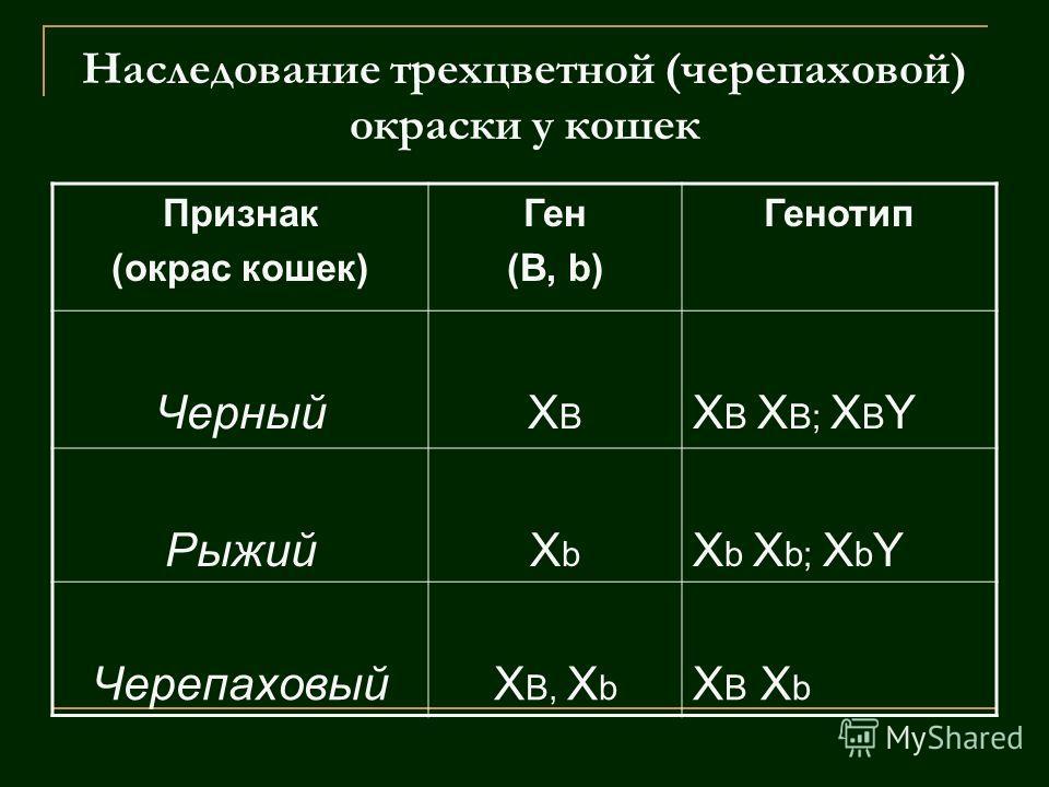 Признак (окрас кошек) Ген (В, b) Генотип ЧерныйXBXB X B X B; X B Y РыжийXbXb X b X b; X b Y ЧерепаховыйX B, X b X B X b
