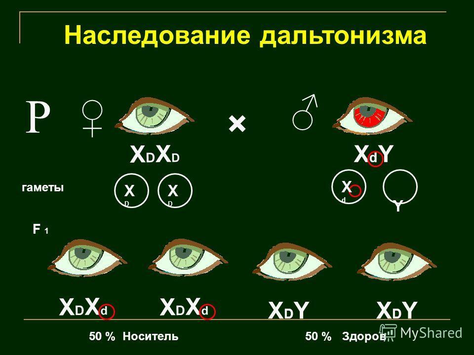 Наследование дальтонизма Р × XDXDXDXD XDXdXDXd XDXdXDXd XdYXdY XDYXDYXDYXDY гаметы F 1 50 % Носитель50 % Здоров Y XdXd XDXD XDXD