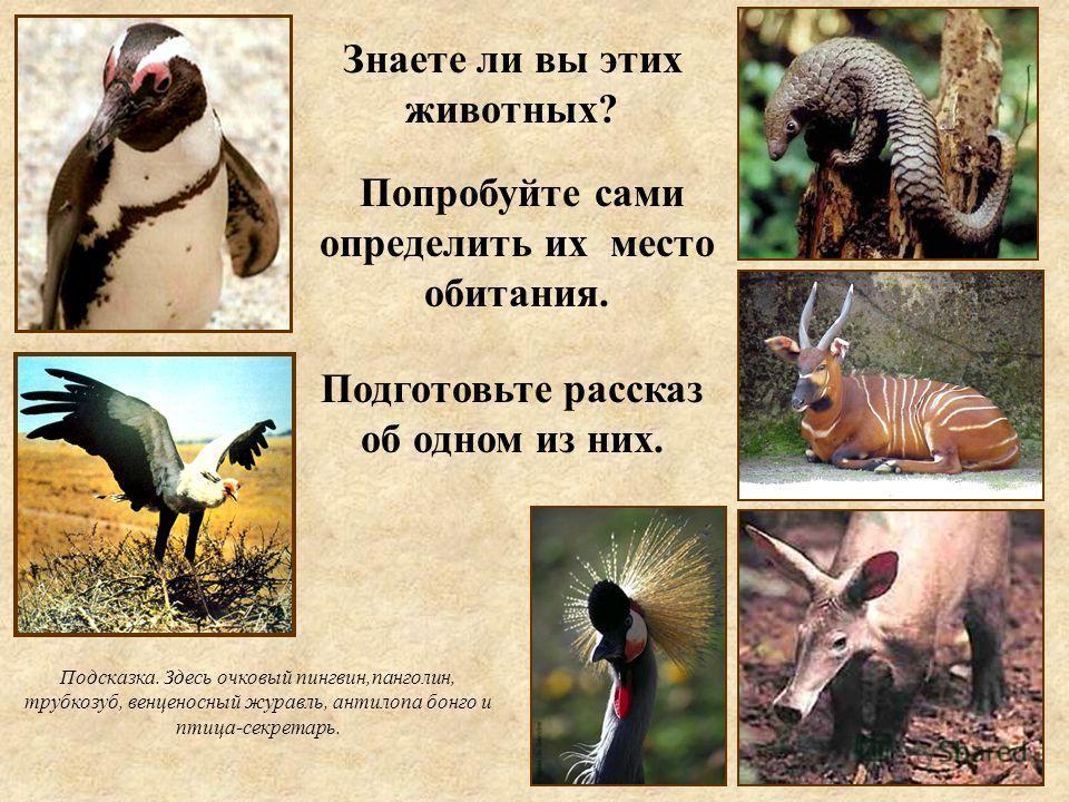 Попробуйте сами определить их место обитания. Знаете ли вы этих животных? Подготовьте рассказ об одном из них. Подсказка. Здесь очковый пингвин,панголин, трубкозуб, венценосный журавль, антилопа бонго и птица-секретарь.