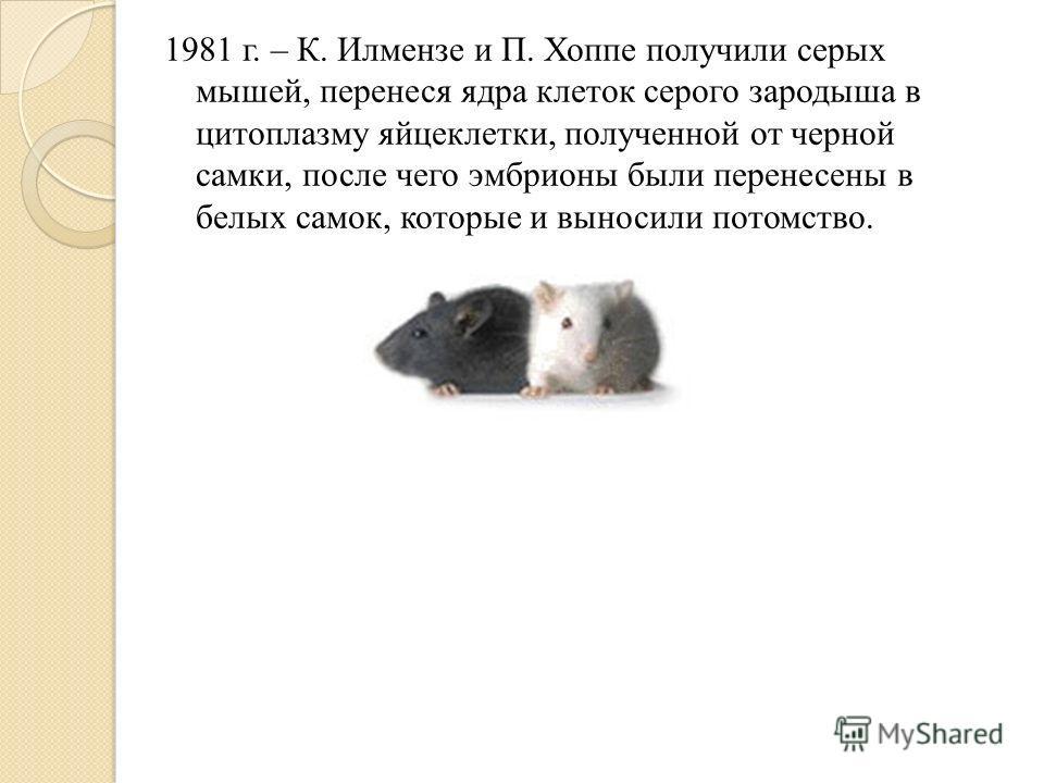 1981 г. – К. Илмензе и П. Хоппе получили серых мышей, перенеся ядра клеток серого зародыша в цитоплазму яйцеклетки, полученной от черной самки, после чего эмбрионы были перенесены в белых самок, которые и выносили потомство.