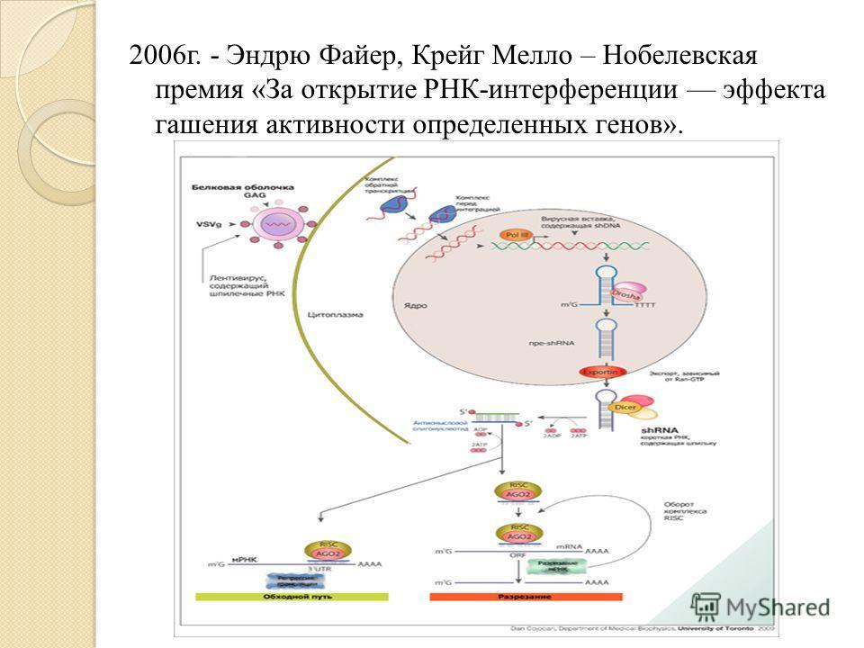 2006г. - Эндрю Файер, Крейг Мелло – Нобелевская премия «За открытие РНК-интерференции эффекта гашения активности определенных генов».