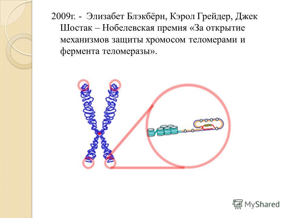 2009г. - Элизабет Блэкбёрн, Кэрол Грейдер, Джек Шостак – Нобелевская премия «За открытие механизмов защиты хромосом теломерами и фермента теломеразы».