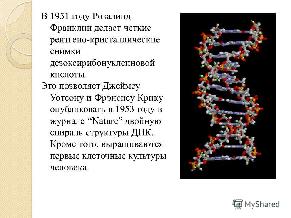 В 1951 году Розалинд Франклин делает четкие рентгено-кристаллические снимки дезоксирибонуклеиновой кислоты. Это позволяет Джеймсу Уотсону и Фрэнсису Крику опубликовать в 1953 году в журнале Nature двойную спираль структуры ДНК. Кроме того, выращивают