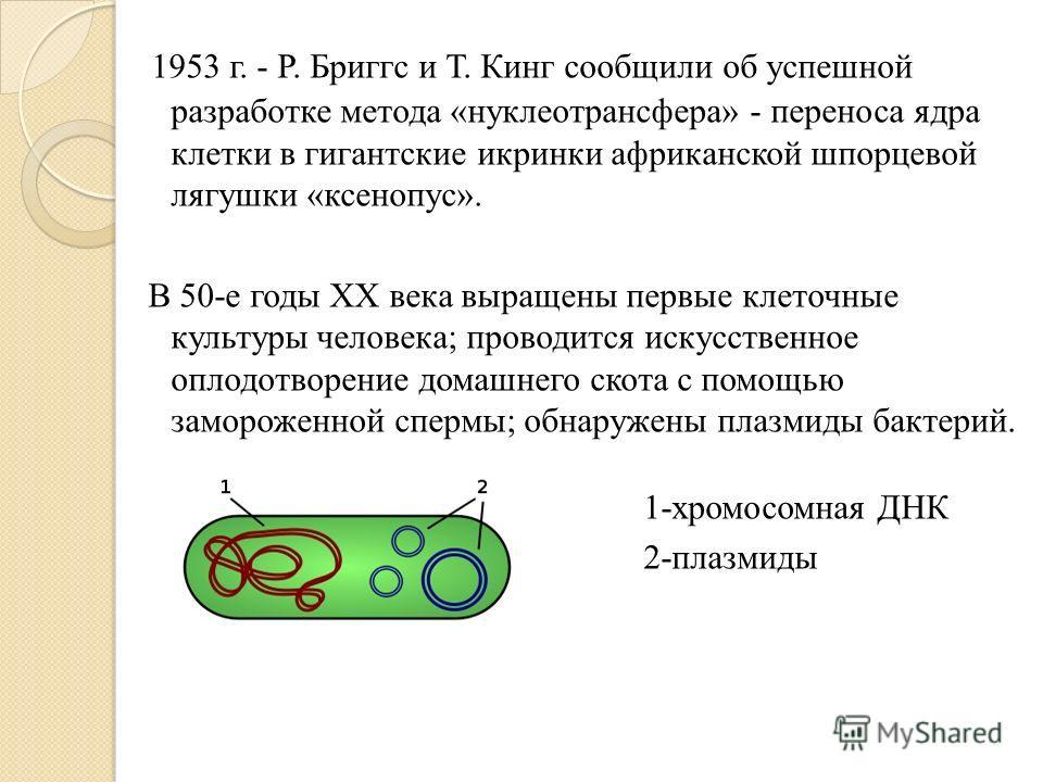 1953 г. - Р. Бриггс и Т. Кинг сообщили об успешной разработке метода «нуклеотрансфера» - переноса ядра клетки в гигантские икринки африканской шпорцевой лягушки «ксенопус». В 50-е годы ХХ века выращены первые клеточные культуры человека; проводится и