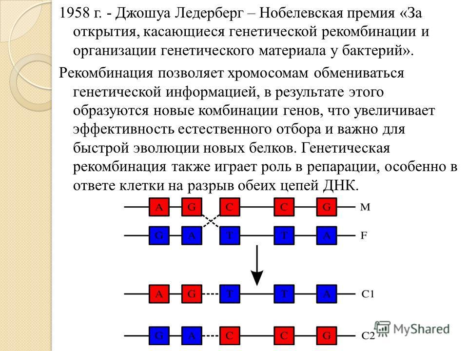 1958 г. - Джошуа Ледерберг – Нобелевская премия «За открытия, касающиеся генетической рекомбинации и организации генетического материала у бактерий». Рекомбинация позволяет хромосомам обмениваться генетической информацией, в результате этого образуют