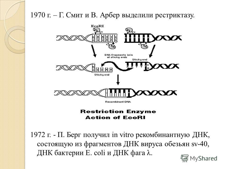 1970 г. – Г. Смит и В. Арбер выделили рестриктазу. 1972 г. - П. Берг получил in vitro рекомбинантную ДНК, состоящую из фрагментов ДНК вируса обезьян sv-40, ДНК бактерии E. coli и ДНК фага λ.