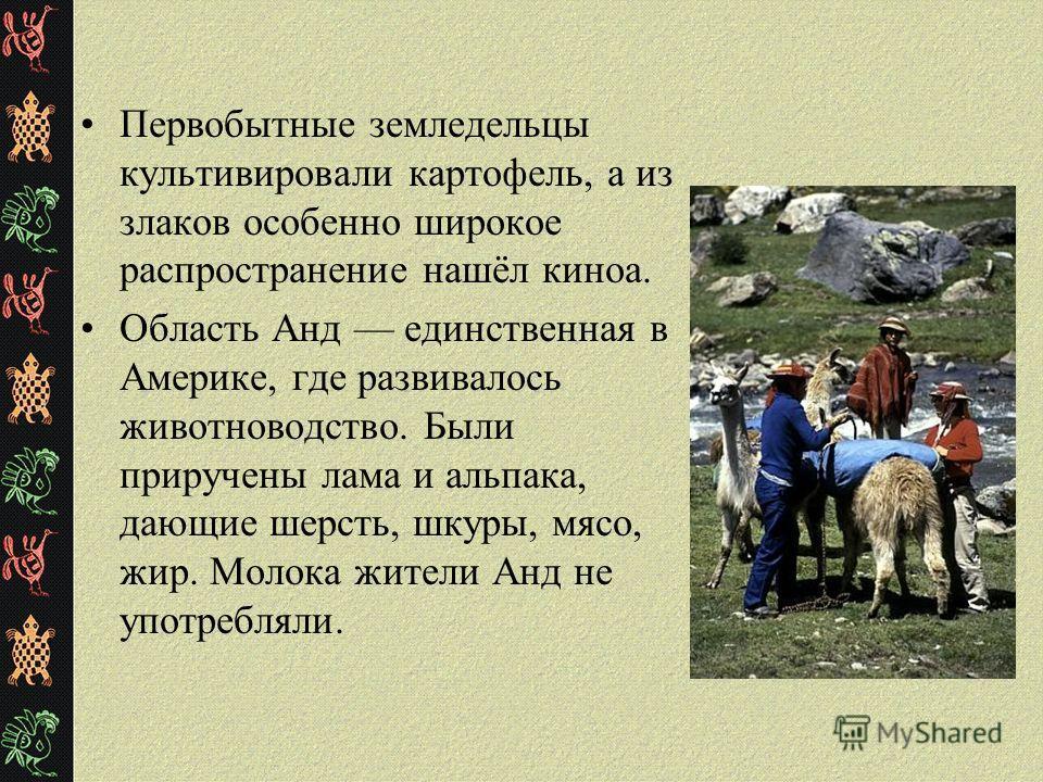 Первобытные земледельцы культивировали картофель, а из злаков особенно широкое распространение нашёл киноа. Область Анд единственная в Америке, где развивалось животноводство. Были приручены лама и альпака, дающие шерсть, шкуры, мясо, жир. Молока жит