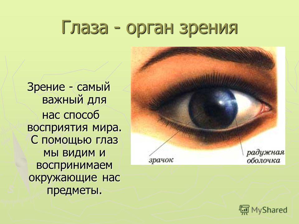 Глаза - орган зрения Зрение - самый важный для нас способ восприятия мира. С помощью глаз мы видим и воспринимаем окружающие нас предметы.
