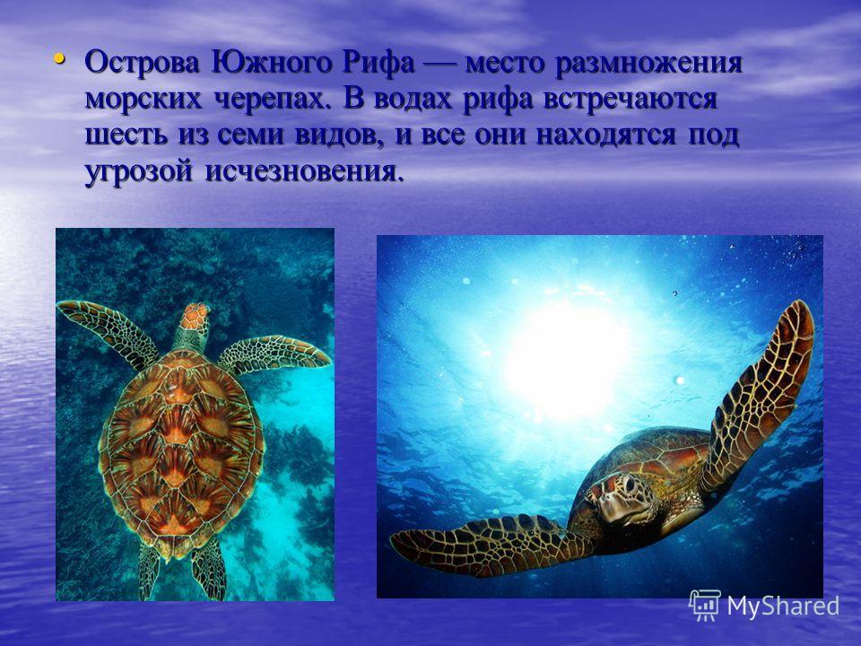Острова Южного Рифа место размножения морских черепах. В водах рифа встречаются шесть из семи видов, и все они находятся под угрозой исчезновения. Острова Южного Рифа место размножения морских черепах. В водах рифа встречаются шесть из семи видов, и