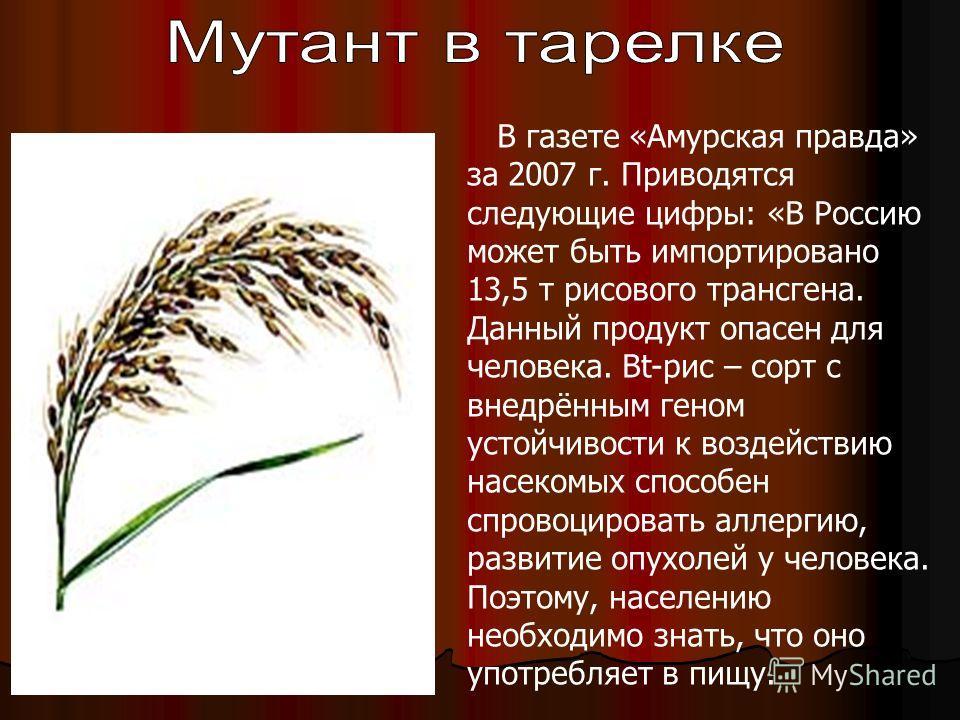 В газете «Амурская правда» за 2007 г. Приводятся следующие цифры: «В Россию может быть импортировано 13,5 т рисового трансгена. Данный продукт опасен для человека. Bt-рис – сорт с внедрённым геном устойчивости к воздействию насекомых способен спровоц