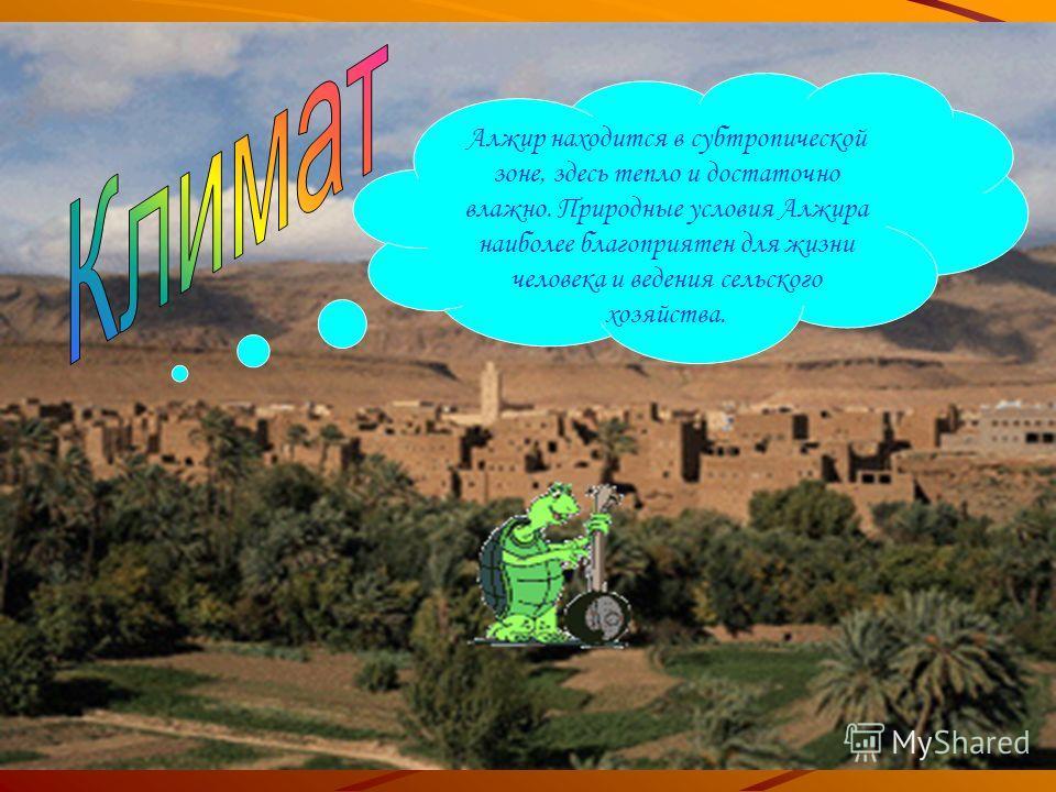 Алжир находится в субтропической зоне, здесь тепло и достаточно влажно. Природные условия Алжира наиболее благоприятен для жизни человека и ведения сельского хозяйства.