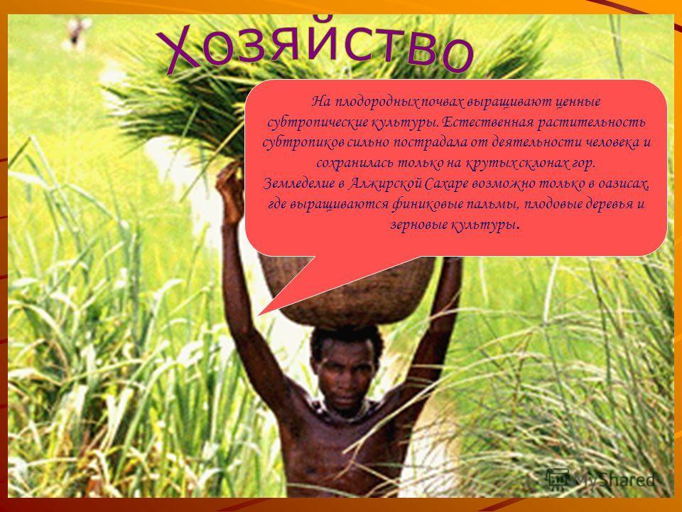 На плодородных почвах выращивают ценные субтропические культуры. Естественная растительность субтропиков сильно пострадала от деятельности человека и сохранилась только на крутых склонах гор. Земледелие в Алжирской Сахаре возможно только в оазисах, г