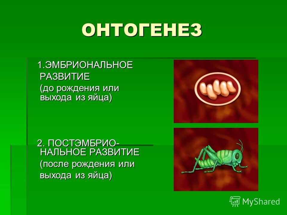 ОНТОГЕНЕЗ ОНТОГЕНЕЗ 1.ЭМБРИОНАЛЬНОЕ 1.ЭМБРИОНАЛЬНОЕ РАЗВИТИЕ РАЗВИТИЕ (до рождения или выхода из яйца) (до рождения или выхода из яйца) 2. ПОСТЭМБРИО- НАЛЬНОЕ РАЗВИТИЕ 2. ПОСТЭМБРИО- НАЛЬНОЕ РАЗВИТИЕ (после рождения или (после рождения или выхода из