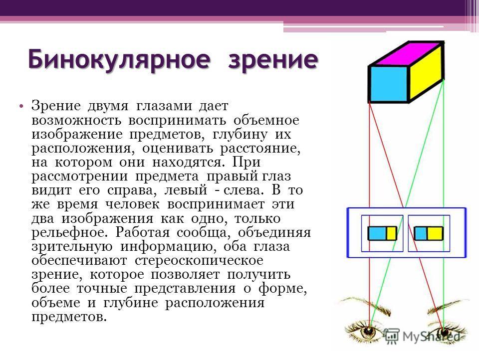 Бинокулярное зрение Зрение двумя глазами дает возможность воспринимать объемное изображение предметов, глубину их расположения, оценивать расстояние, на котором они находятся. При рассмотрении предмета правый глаз видит его справа, левый - слева. В т