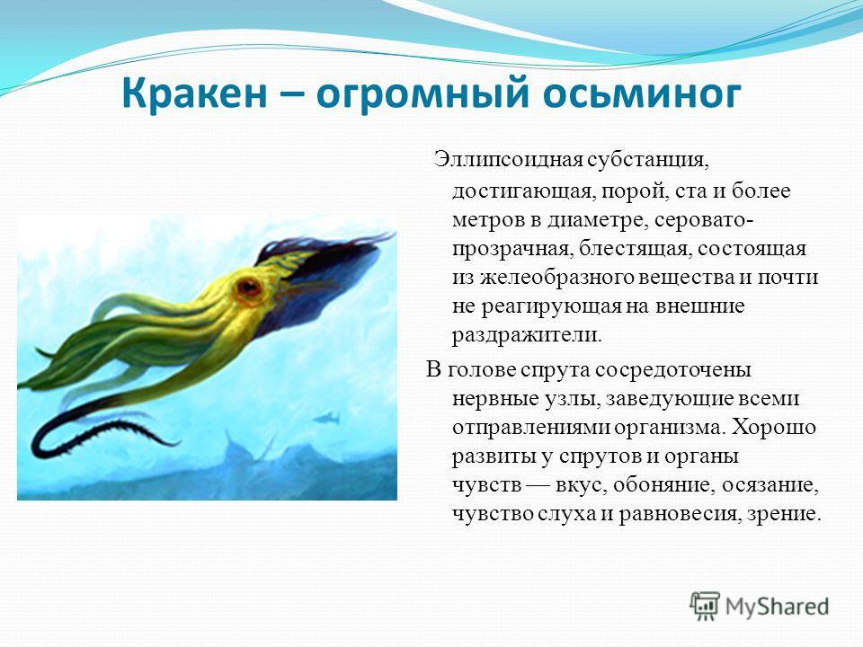 Кракен – огромный осьминог Эллипсоидная субстанция, достигающая, порой, ста и более метров в диаметре, серовато- прозрачная, блестящая, состоящая из желеобразного вещества и почти не реагирующая на внешние раздражители. В голове спрута сосредоточены