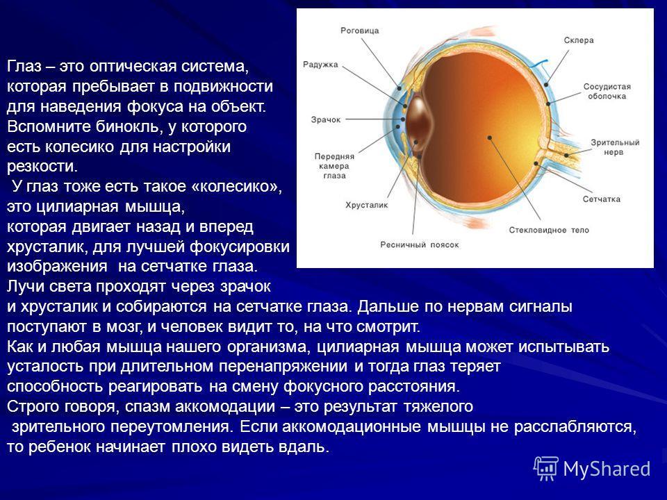 Глаз – это оптическая система, которая пребывает в подвижности для наведения фокуса на объект. Вспомните бинокль, у которого есть колесико для настройки резкости. У глаз тоже есть такое «колесико», это цилиарная мышца, которая двигает назад и вперед