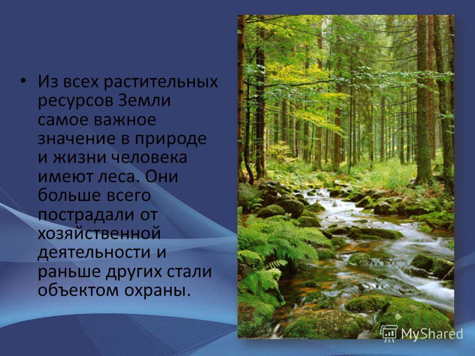 Из всех растительных ресурсов Земли самое важное значение в природе и жизни человека имеют леса. Они больше всего пострадали от хозяйственной деятельности и раньше других стали объектом охраны.