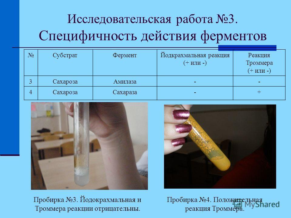 Исследовательская работа 3. Специфичность действия ферментов СубстратФерментЙодкрахмальная реакция (+ или -) Реакция Троммера (+ или -) 3СахарозаАмилаза-- 4СахарозаСахараза-+ Пробирка 3. Йодокрахмальная и Троммера реакции отрицательны. Пробирка 4. По