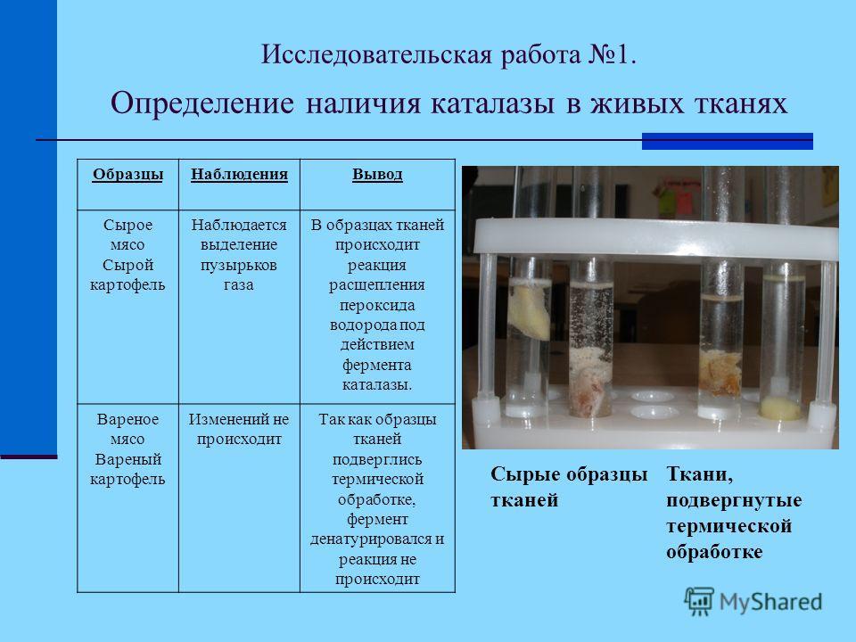 Исследовательская работа 1. Определение наличия каталазы в живых тканях Сырые образцы тканей Ткани, подвергнутые термической обработке ОбразцыНаблюденияВывод Сырое мясо Сырой картофель Наблюдается выделение пузырьков газа В образцах тканей происходит