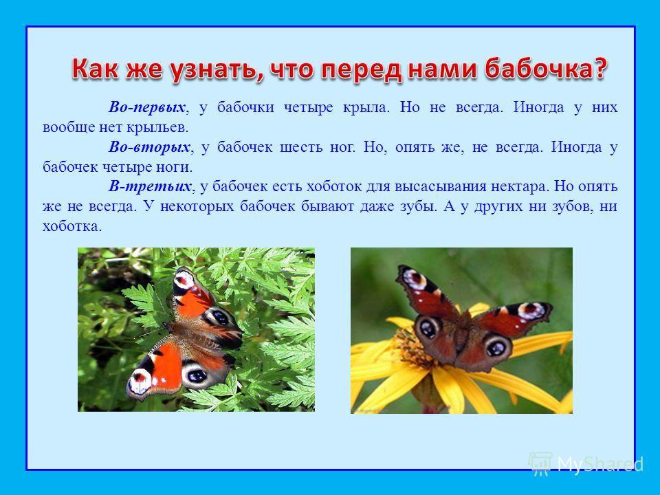 Во-первых, у бабочки четыре крыла. Но не всегда. Иногда у них вообще нет крыльев. Во-вторых, у бабочек шесть ног. Но, опять же, не всегда. Иногда у бабочек четыре ноги. В-третьих, у бабочек есть хоботок для высасывания нектара. Но опять же не всегда.