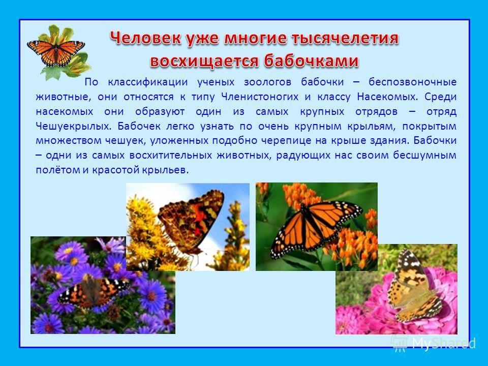 По классификации ученых зоологов бабочки – беспозвоночные животные, они относятся к типу Членистоногих и классу Насекомых. Среди насекомых они образуют один из самых крупных отрядов – отряд Чешуекрылых. Бабочек легко узнать по очень крупным крыльям,