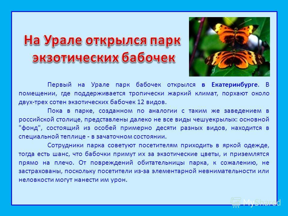 Первый на Урале парк бабочек открылся в Екатеринбурге. В помещении, где поддерживается тропически жаркий климат, порхают около двух-трех сотен экзотических бабочек 12 видов. Пока в парке, созданном по аналогии с таким же заведением в российской столи