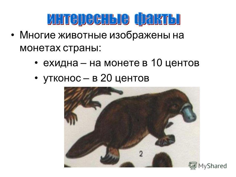 Многие животные изображены на монетах страны: ехидна – на монете в 10 центов утконос – в 20 центов