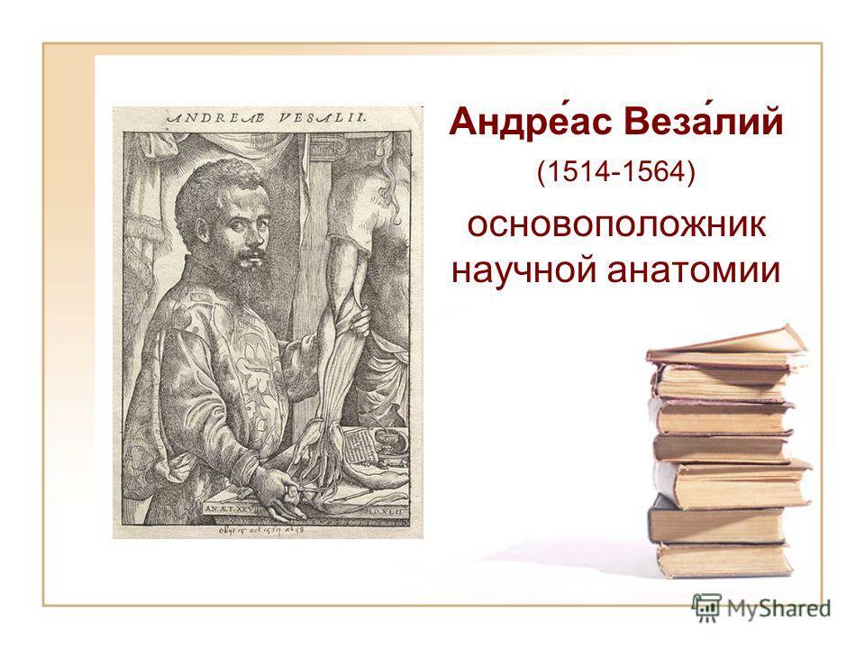 Андре́ас Веза́лий (1514-1564) основоположник научной анатомии