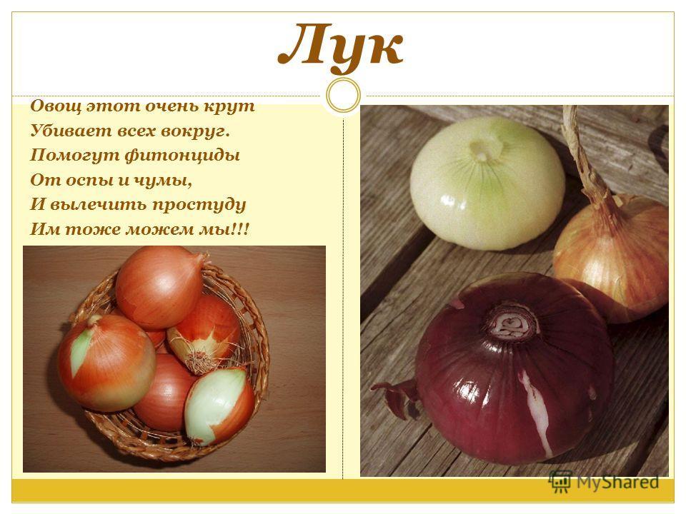 Лук Овощ этот очень крут Убивает всех вокруг. Помогут фитонциды От оспы и чумы, И вылечить простуду Им тоже можем мы!!!