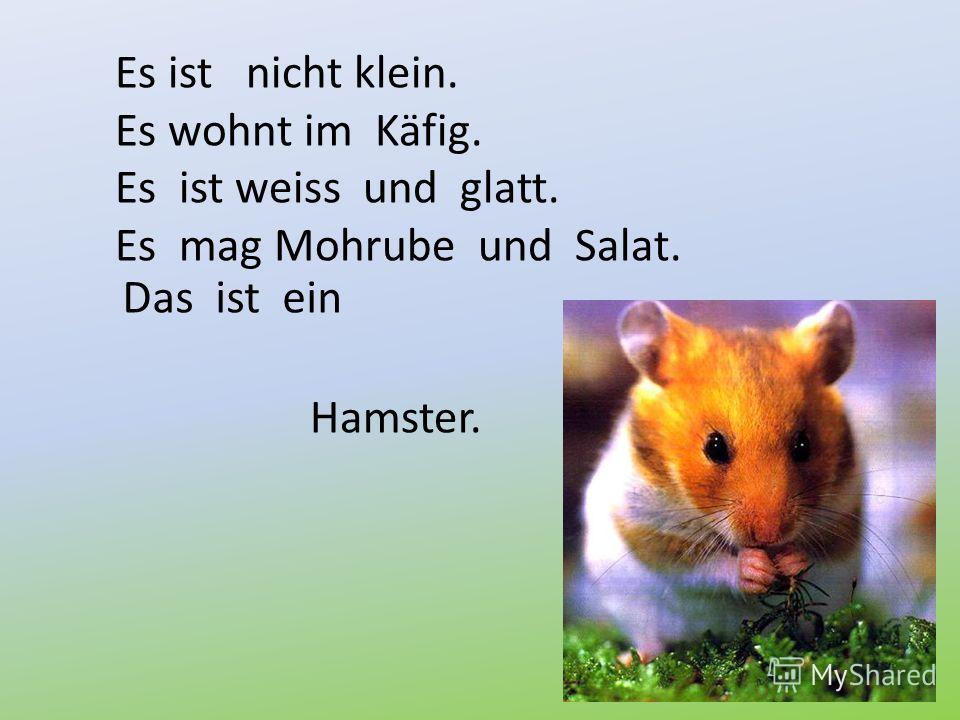 Es ist nicht klein. Es wohnt im Käfig. Es ist weiss und glatt. Es mag Mohrube und Salat. Das ist ein Hamster.