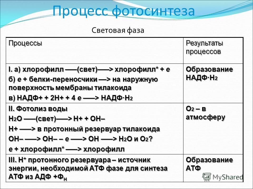 Процесс фотосинтеза Процессы Результаты процессов I. а) хлорофилл –––(свет)–––> хлорофилл* + e б) e + белки-переносчики ––> на наружную поверхность мембраны тилакоида в) НАДФ+ + 2H+ + 4 e –––> НАДФ·H 2 Образование НАДФ·H 2 II. Фотолиз воды H 2 O –––(