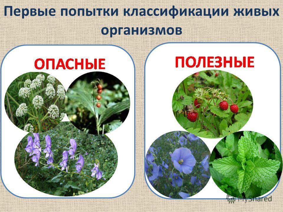 Первые попытки классификации живых организмов