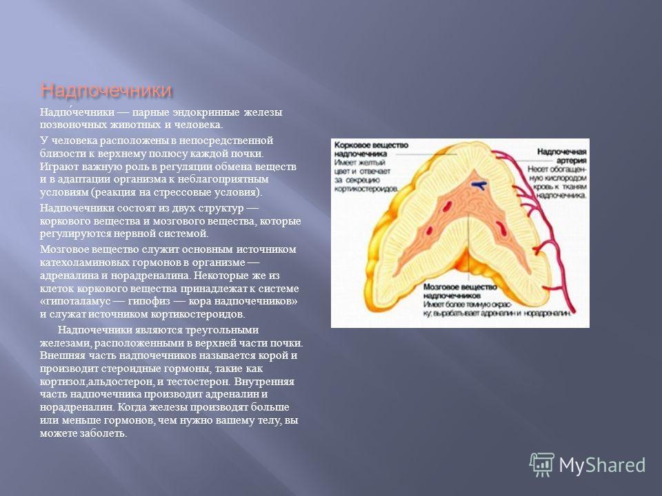 Надпочечники Надпочечники парные эндокринные железы позвоночных животных и человека. У человека расположены в непосредственной близости к верхнему полюсу каждой почки. Играют важную роль в регуляции обмена веществ и в адаптации организма к неблагопри