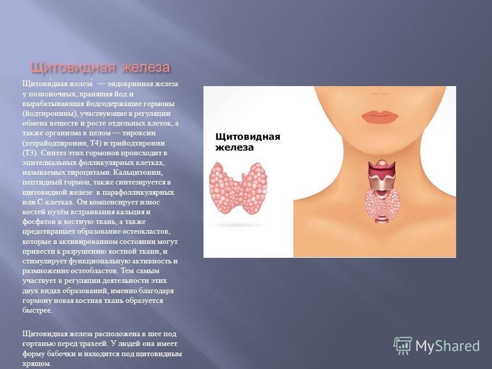 Щитовидная железа Щитовидная железа эндокринная железа у позвоночных, хранящая йод и вырабатывающая йодсодержащие гормоны ( йодтиронины ), участвующие в регуляции обмена веществ и росте отдельных клеток, а также организма в целом тироксин ( тетрайодт