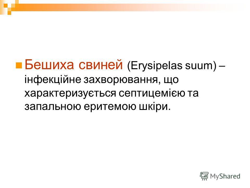 Бешиха свиней (Erysipelas suum) – інфекційне захворювання, що характеризується септицемією та запальною еритемою шкіри.
