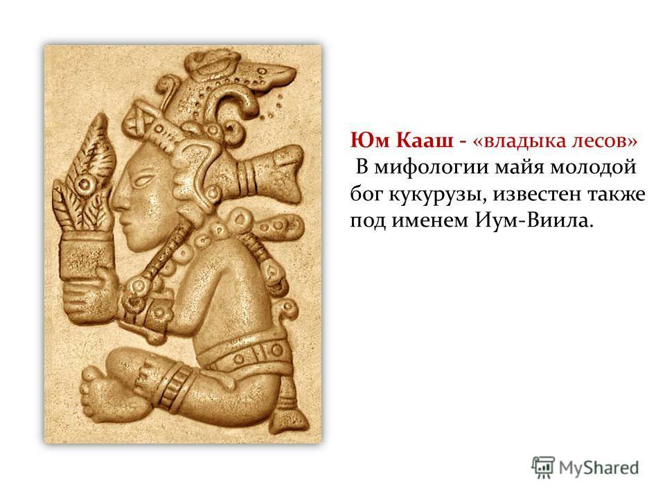 Царство растений Юм Кааш - «владыка лесов» В мифологии майя молодой бог кукурузы, известен также под именем Иум-Виила.