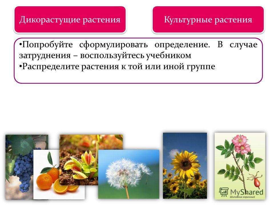 Царство растений Дикорастущие растения Культурные растения Попробуйте сформулировать определение. В случае затруднения – воспользуйтесь учебником Распределите растения к той или иной группе