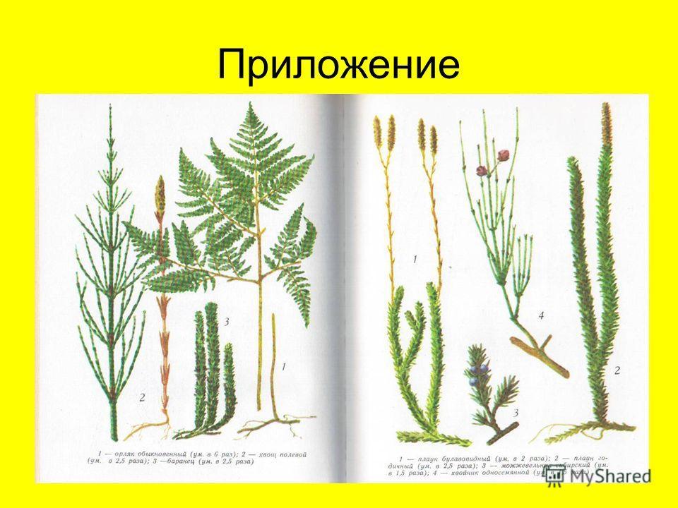 лист Назови части растения. Чистяк весенний цветок стебель корень