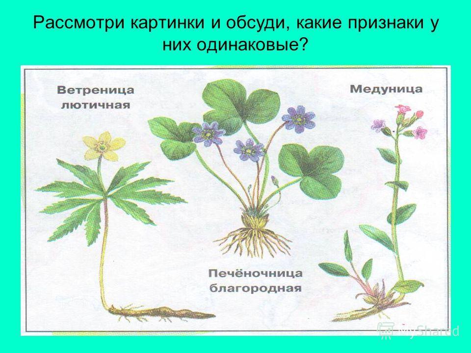 Многообразие растений Куда приглашает нас поэт? Почему он назвал эту страну зеленой? Что он рассказал о ней?