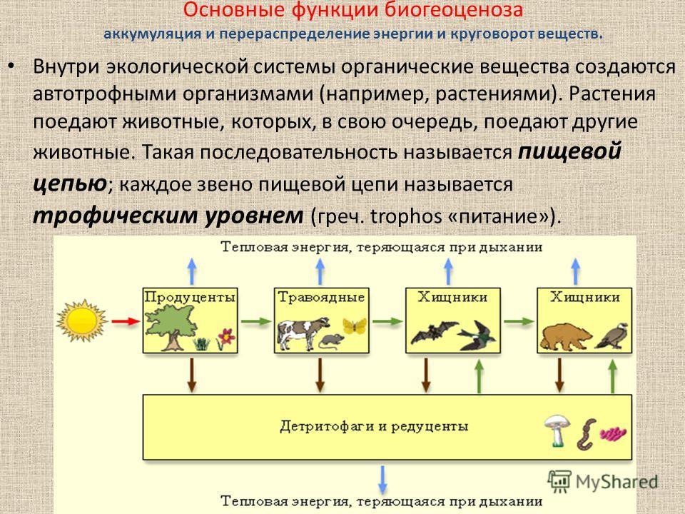Основные функции биогеоценоза аккумуляция и перераспределение энергии и круговорот веществ. Внутри экологической системы органические вещества создаются автотрофными организмами (например, растениями). Растения поедают животные, которых, в свою очере