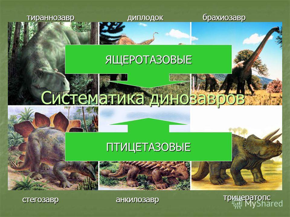 Систематика динозавров тираннозаврдиплодокбрахиозавр стегозавранкилозавр трицератопс ЯЩЕРОТАЗОВЫЕ ПТИЦЕТАЗОВЫЕ