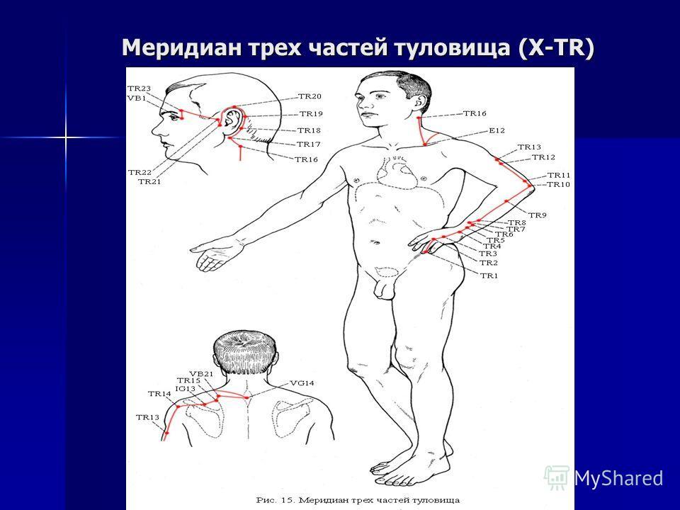 Меридиан трех частей туловища (X-TR)