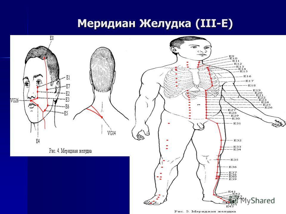 Меридиан Желудка (III-E)