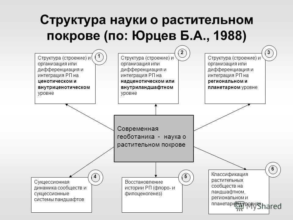 Структура науки о растительном покрове (по: Юрцев Б.А., 1988) Современная геоботаника - наука о растительном покрове Структура (строение) и организация или дифференциация и интеграция РП на ценотическом и внутриценотическом уровне 1 Структура (строен