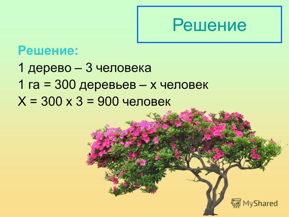 Решение Решение: 1 дерево – 3 человека 1 га = 300 деревьев – х человек Х = 300 х 3 = 900 человек