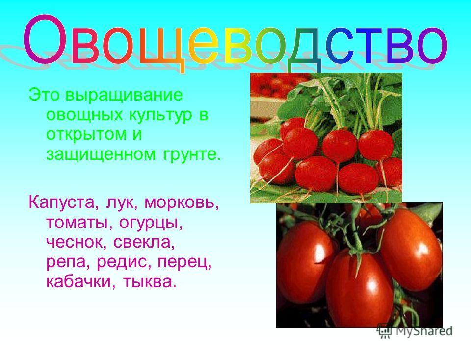 Это выращивание овощных культур в открытом и защищенном грунте. Капуста, лук, морковь, томаты, огурцы, чеснок, свекла, репа, редис, перец, кабачки, тыква.