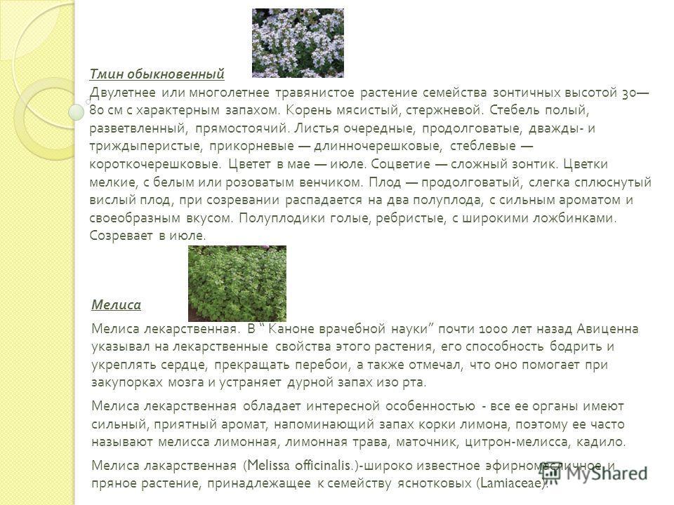 Тмин обыкновенный Двулетнее или многолетнее травянистое растение семейства зонтичных высотой 30 80 см с характерным запахом. Корень мясистый, стержневой. Стебель полый, разветвленный, прямостоячий. Листья очередные, продолговатые, дважды - и триждыпе