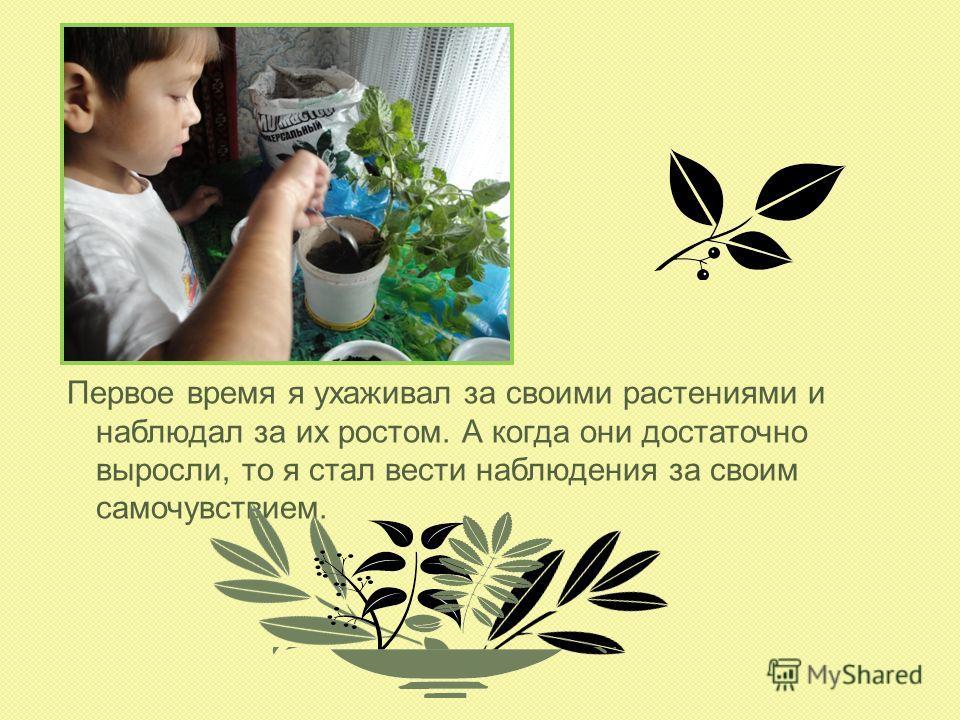 Первое время я ухаживал за своими растениями и наблюдал за их ростом. А когда они достаточно выросли, то я стал вести наблюдения за своим самочувствием.