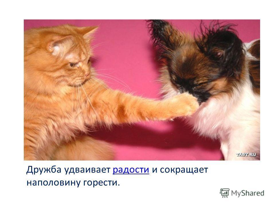 Дружба удваивает радости и сокращает наполовину горести.радости