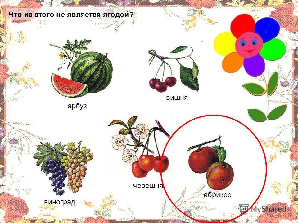 Что из этого не является ягодой? арбуз виноград вишня черешня абрикос